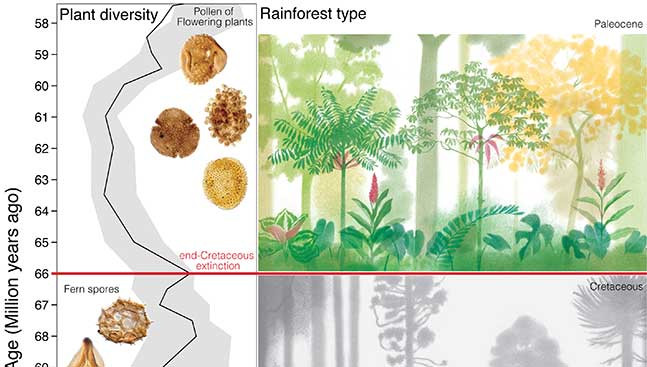 La USAL colabora en la investigación internacional que explica cómo la extinción del final del Cretácico dio origen a los bosques tropicales actuales