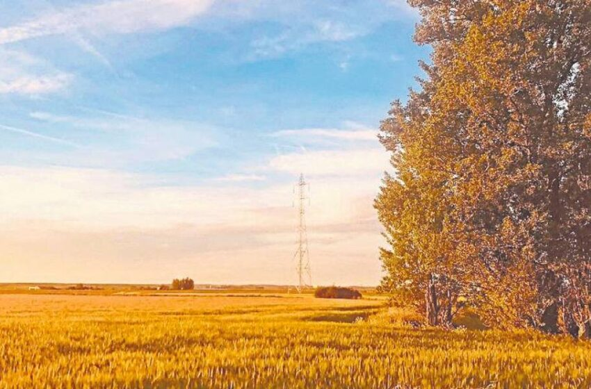 Humedales y paisajes cerealistas a diez minutos de Salamanca