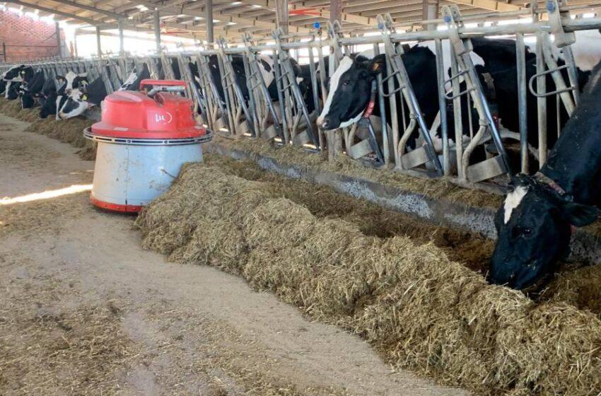 Los robots 'amigos' de las vacas triunfan en Salamanca