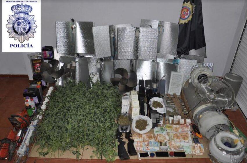 Cuatro detenidos con 525 plantas