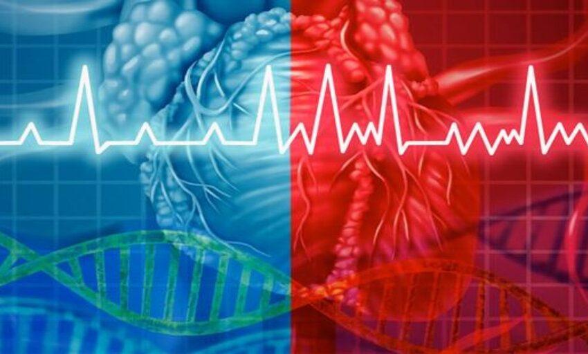 Casi 1 de cada 5 pacientes que mueren de muerte súbita cardíaca portan un gen sospechoso