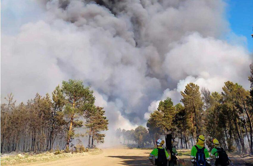 La zona afectada es monte de pino, sin que se pueda cuantificar la superficie quemada