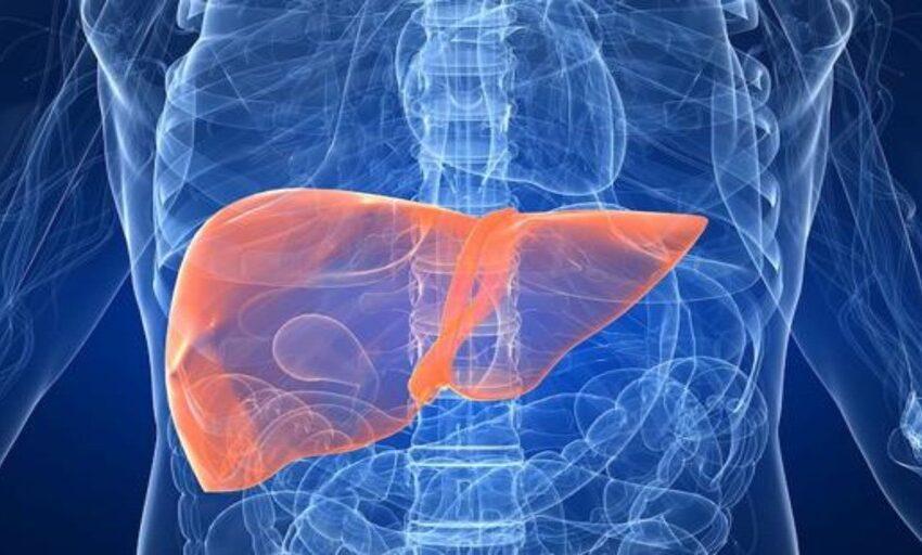 El colesterol bueno puede proteger el hígado