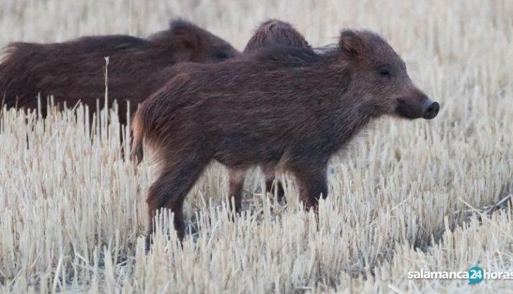Recogen más de 225.000 firmas que se oponen a la caza de crías como un método de control de la fauna